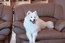 狗狗将名贵沙发咬碎,惨遭主人丢弃,当再次开门时,画面让人泪崩